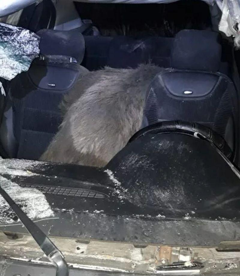 Accident ciudat pe un drum din județul Dâmbovița: cu ce s-a trezit un şofer în maşină